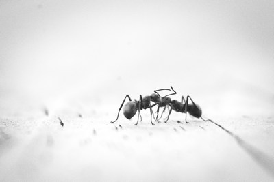 How To Get Rid Of Ants In The Bathroom The Definitive Guide